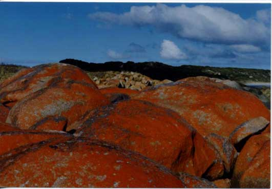 Orange Lichen colours granite boulders
